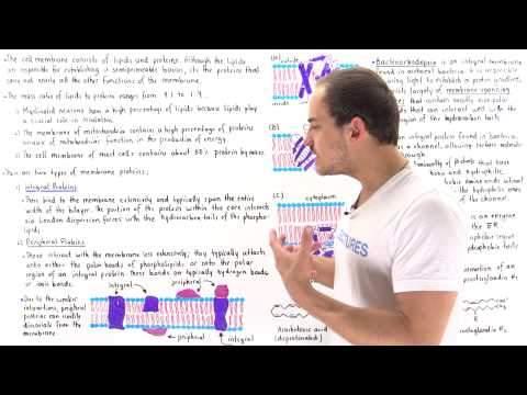 Integral and Peripheral Membrane Proteins