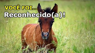 Charley significado cavalo um