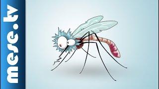 Iszkiri Zenekar: Megfogtam egy szúnyogot | MESE TV