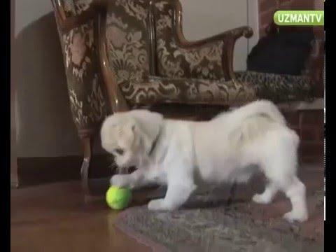 Evde Kedi Ve Köpek Birlikte Nasıl Bakılır