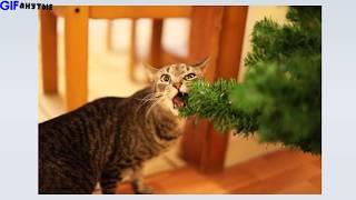 Коты и новогодние ёлки