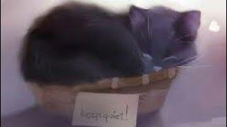 Самые милые картинки с котиками (кошатники сюда)😊🐱🐈
