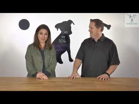 Dog Food Confusion - Can My Dog...? Show - Can My Dog Thrive on different types of Dog Food?