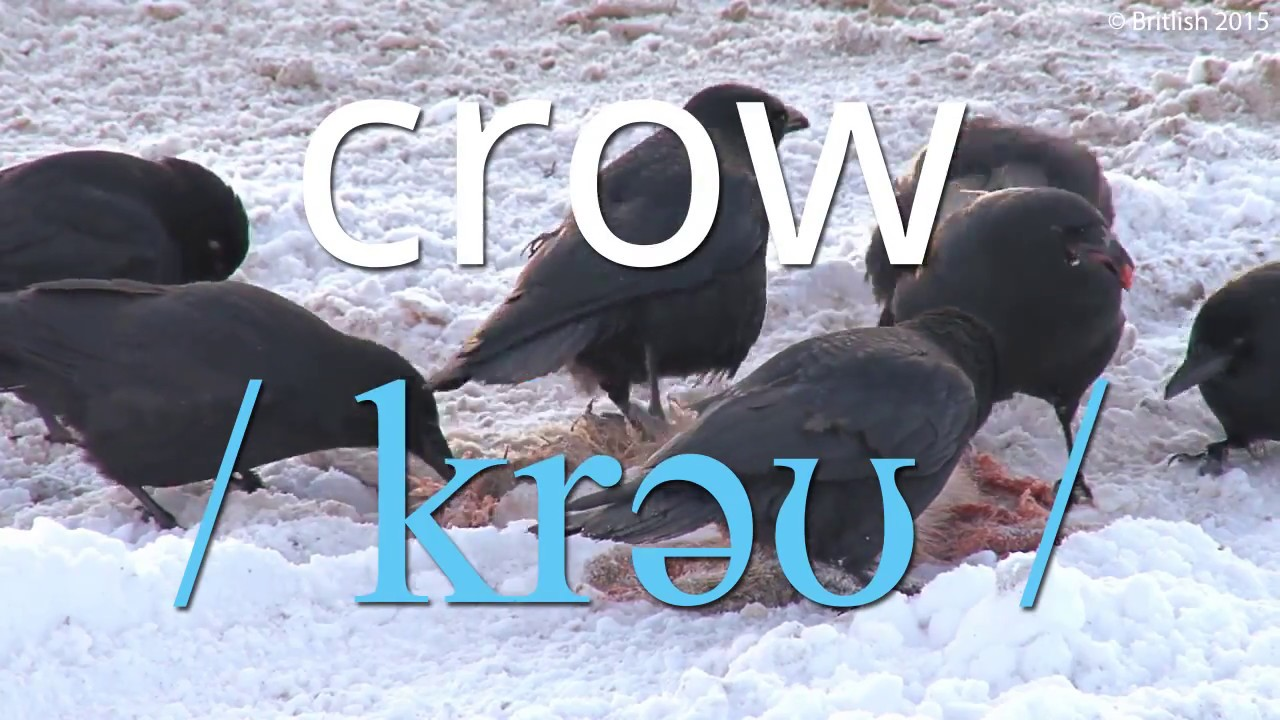 How to Pronounce Crow in British English.