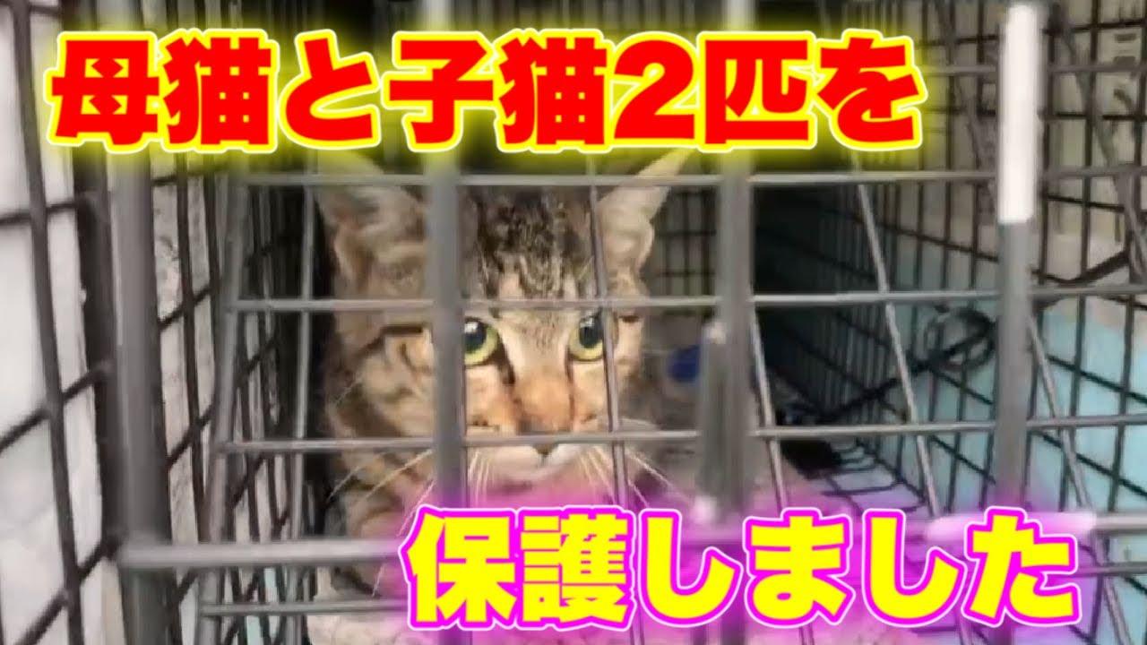 集合住宅に住んでいた野良猫の母猫と子猫達を保護した時の様子です【We rescued mother cat and kittens】