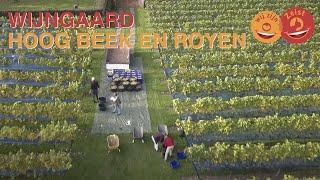 Wijngaard Hoog Beek & Royen Zeist