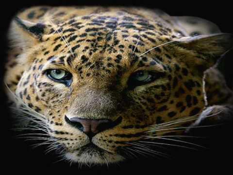 Savanne Afrika ~ mit afrikanischen Tieren und Musik ~ Africa