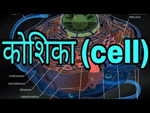 Cell in hindi || कोशिका क्या है ! || - YouTube