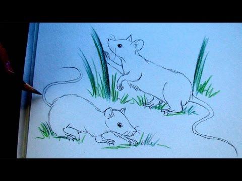 Zeichnen lernen: Maus bzw. Ratte – Maus und Gras Malen lernen