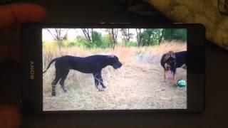 Sony Xperia Z2 воспроизведение видео(Sony Xperia Z2 воспроизведение видео., 2014-09-04T18:25:04.000Z)