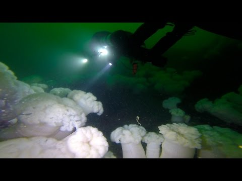 Diving the San Juan Islands