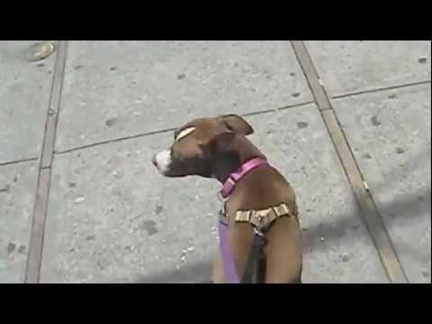DOG WALKING !!
