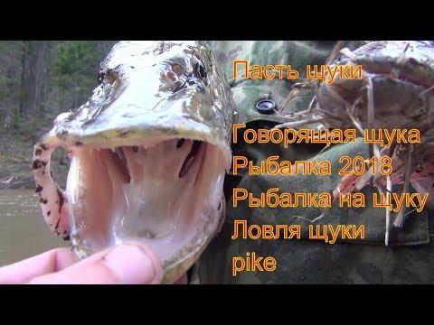 Пасть щуки Говорящая щука Рыбалка 2018 Рыбалка на щуку Ловля щуки  Большая щука на спиннинг pike