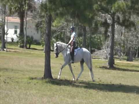 Training the young classical dressage horse