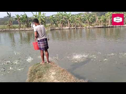 Fish Farming Career ❙ Amazing Fish Catch ❙ Fish Cultivation In Pond ❙ Earn By Fish ❙World Nature ❙💯