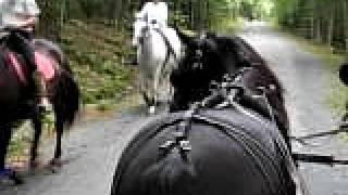 2-horse carriage passes horseback riders, Acadia, Maine