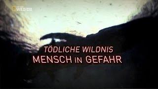 DOKU - Tödliche Wildnis - Menschen in Gefahr - Grizzly Attacke - HD