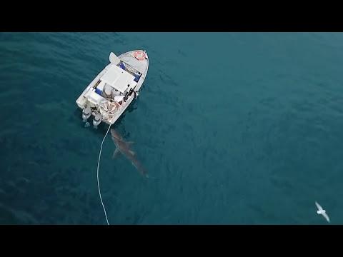 Shark Attacks boat ORIGINAL FOOTAGE FULL TRUE STORY