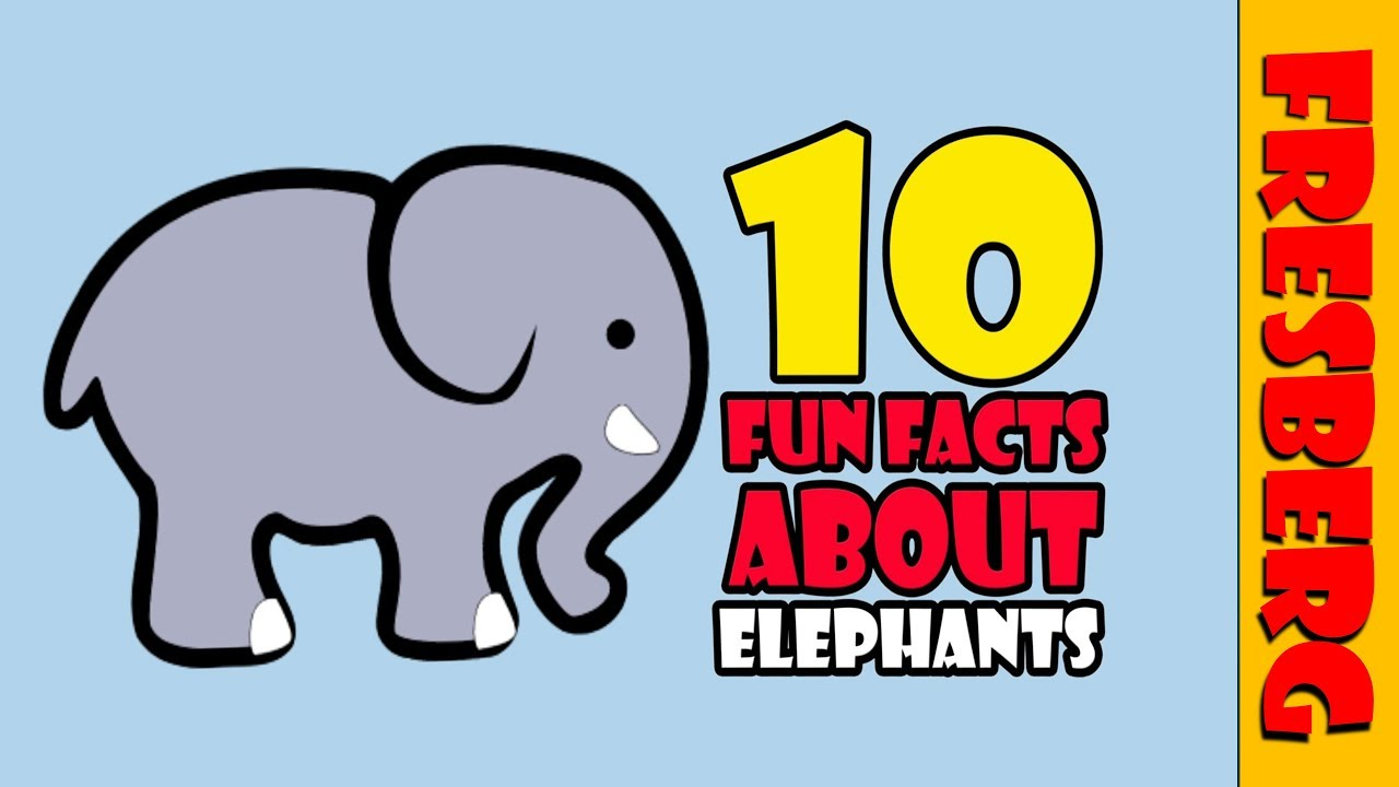 Top 10 Fun Facts about elephants for kids! Learn about animals (Educational  Cartoon)