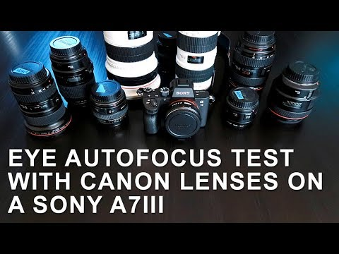 Sony A7III Focus Test with Canon Lenses and Metabones Adapter