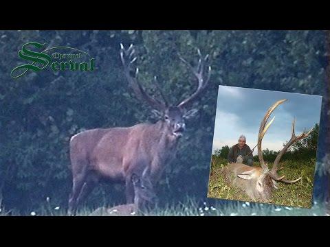Red deer in mating season - Hunting in Croatia