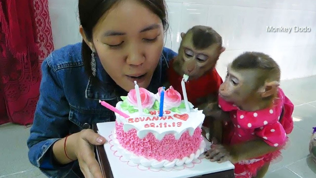 Monkey Dodo!! Wow Dodo And Mori Surprise To Join Mom Birthday