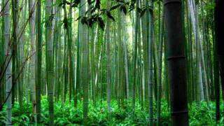 Trail of the Angels - Bamboo Flute Chinese Music ( Xiao )