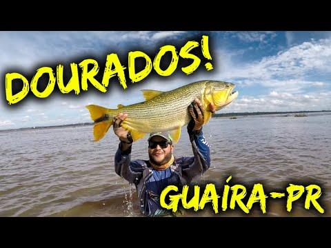 GUAÍRA, O MELHOR LUGAR PARA PESCAR DOURADOS!