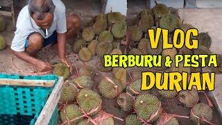 Berburu Durian Langsung Ke Petani Durian Pesta Durian