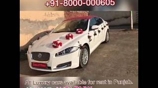 81460-63555 Jaguar Luxury Wedding cars for rent in Patiala Ludhiana Bathinda