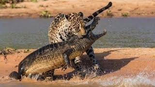 Документальный фильм BBC - О природе и животных дикой Африки