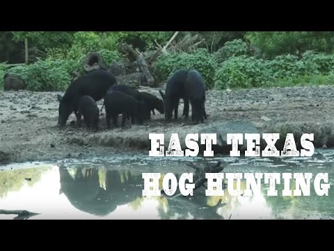 East Texas Hog Hunting