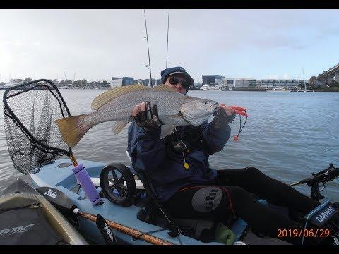 72cm Jew Fish Brisbane River 29 6 2019