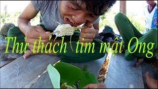 Sinh Tồn Trong Rừng. và  thử thách tim mật Ong .#truy - rmah vlogs p2