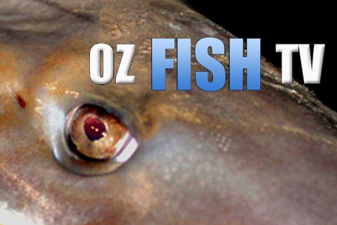 Download LANDBASED WESTERNPORT GUMMIES - TENBY POINT - Oz Fish TV