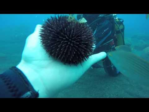 Madeira Diving 2017