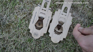 A 2nd Look At the Evo Trapz Cardboard Mousetrap (Newly Improved Design)