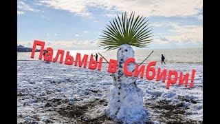 Ядерная зима 19 века? Пальмы в Сибири!