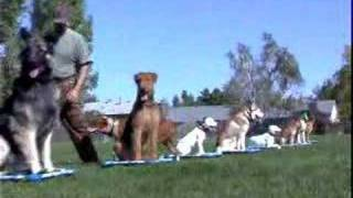 Pit Bull Obedience - Sit Happens Dog Training School