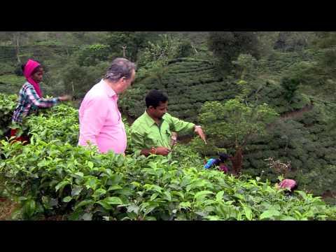 Luxmi Tea : A Century in Tea