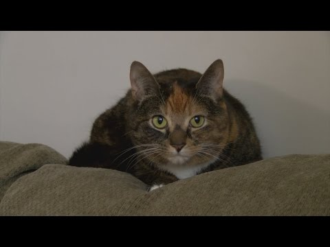 Legislative proposal could make declawing cats in New York state illegal