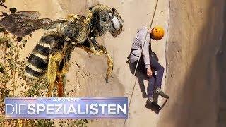 Bienen-Angriff: Unerfahrener Kletterer erleidet Schock an der Felswand | Die Spezialisten | SAT.1 TV