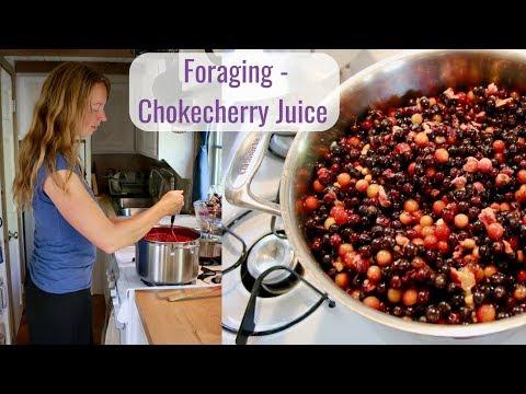 Wild Food Foraging - Chokecherry Juice