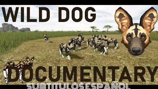 Wild Dog Documentary||Lycaon/Perro Salvaje Documental // SUBTITULOS AL ESPAÑOL //Créditos en la Desc