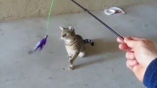 SmartyKat Frisky Flyer Feather Wand Interactive Cat Toy In Action