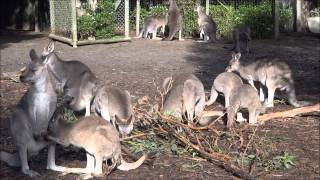 Oceans 2 Earth Volunteers Surf Coast Koala & Wildlife Project