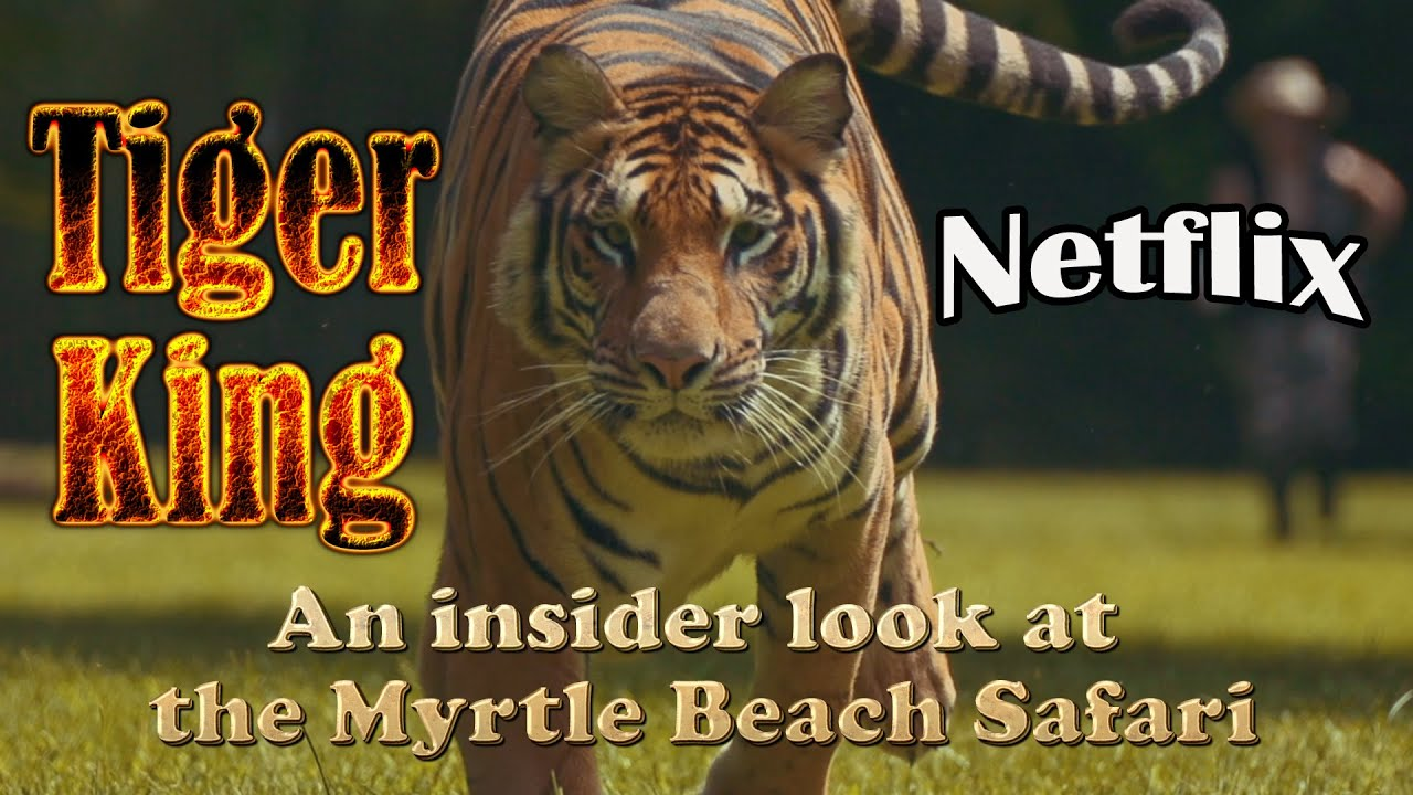 "Insider Look at the Myrtle Beach Safari - Netflix ""Tiger ..."