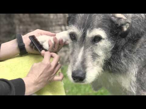 Funny Dog Outtakes from TV Ad Shoot | HIF Australia