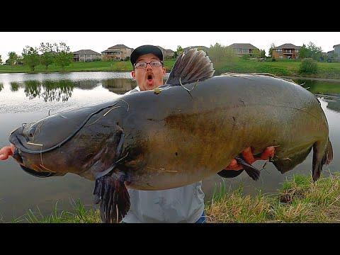 WORLD RECORD Catfish Caught At A City Pond?!?! (Bank Fishing)