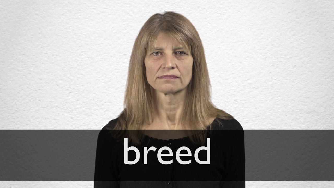 Breed definition and meaning   Collins English Dictionary
